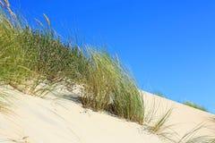 Beach_grass_wind Fotos de Stock Royalty Free