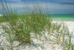 Beach grasses. Along the Gulf of Mexico royalty free stock photo