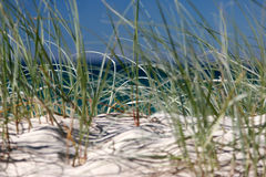 Beach grasses 2. Looking through grass to ocean Stock Photos
