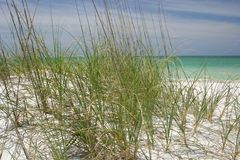 Beach Grasses. Green grasses on beach to prevent erosion Royalty Free Stock Photography