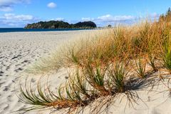 Beach grasses in the sand, with the ocean and an island in the background. A New Zealand beach landscape, with colorful native tussocks in the foreground. The Stock Image