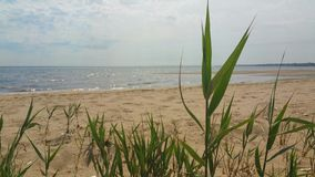 Beach through the grasses. Stock Photography