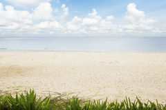 The beach with green plants and white sand on blue cloudy sky Royalty Free Stock Images