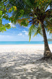 Green tree on a white sand beach Stock Image