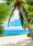 Green tree on a white sand beach Royalty Free Stock Images