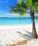 Green tree on a white sand beach Stock Images