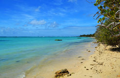 Beach with tree. A beautiful blue sky and sea in Saint-Francois beach in Guadeloupe Royalty Free Stock Image