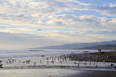 Beach, gulls, ocean and couple holding hands stock images
