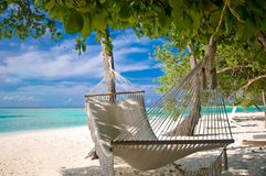 Beach Hammock. Under palm trees
