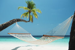 Beach Hammock. Between two palm trees on the maldives Royalty Free Stock Image