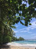 Beach in hawaii and trees Stock Image