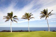beach hawaiian palms 免版税库存照片