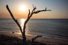 Beach at Holbox Island Mexico. Sunset along wild beach on Holbox Island Mexico Stock Photos