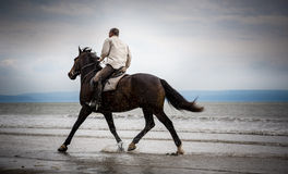 Beach horse rider. Equestrian sport: A brown active horse with rider galloping away in the water on the beach in summer Stock Photos