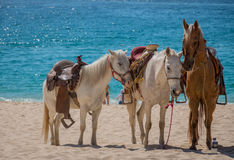Beach horse rides. Horses on a Mexican beach resting while they wait for tourists to ride them Royalty Free Stock Images