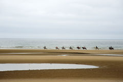 Beach and horses Royalty Free Stock Image