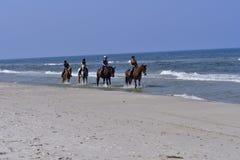 Beach horses stock photo