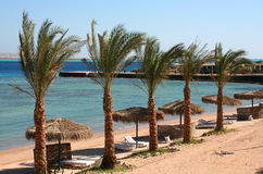 Beach hurghada red sea royalty free stock photo
