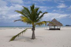 Beach Hut. A beach hut and palm tree on a deserted white sand beach Royalty Free Stock Photo