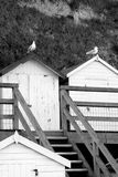 Beach huts. Birds siting on beach huts in Beer, Devon Stock Photos