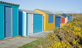 Beach huts. A row of brightly colored beach huts surrounded by grass and flowering yellow gorse bushes Stock Photo