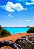 Beach in Ibiza island with turquoise water Stock Photos