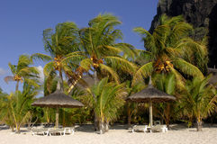 Beach-idyll. Beach at Mauritius island with coconut palms Royalty Free Stock Photography