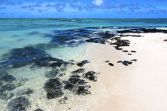 Beach ile du cerfs seaweed   indian ocean mauritius rock Stock Photos