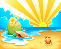 A beach. Illustration of a beach and coconut Royalty Free Stock Photography