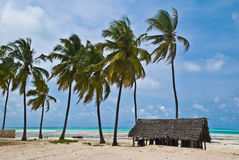Beach of Jambiani, Zanzibar Royalty Free Stock Photo