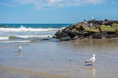 Beach Jetty Stock Images