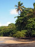 Beach and jungle Stock Images