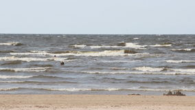 Beach in Jurmala stock footage