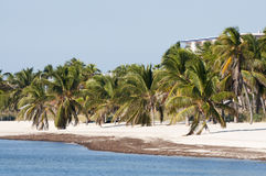 Beach in Key West. Beautiful white sand beach in Key West, Florida, USA Royalty Free Stock Photos