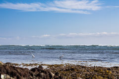 Beach La Lancha stock image