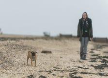 Beach labrador royalty free stock images