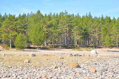 Beach on Ladoga lake at morning. Stock Images
