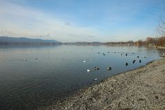The Beach of Lake Constance at Radolfzell Royalty Free Stock Images