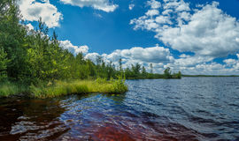 Beach Lake Forest, young birch trees. Shrubs, grass, hot summer day Royalty Free Stock Images