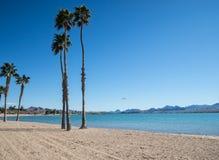 Beach at Lake Havasu. Lake Havasu, Arizona, Palm trees on the beach Stock Photo