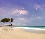 Beach Landscape. Beautiful blue skies and  secluded beach l Stock Photography