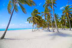 The beach. Landscape of beach with palm trees and the sea Stock Image