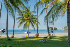 Beach landscape with palm trees Royalty Free Stock Image