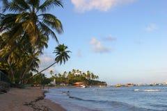 Beach landscape scene at Bahia, Brazil. A tropical beach with coconut trees and blue sky at Bahia, Brazil Stock Image