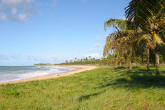 Beach landscape scene at Bahia, Brazil. A tropical beach with coconut trees and blue sky at Bahia, Brazil Stock Images