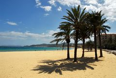 Beach of Lavandou. With palm trees Royalty Free Stock Photo