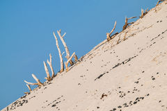 The beach of Le Dune, Porto Pino, Sardinia, Italy. Stock Photography
