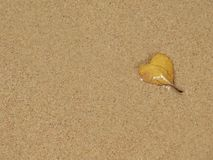 Beach leaf. Beach sand and a leaf with a heart shape of a yellow color wet by sea water Royalty Free Stock Image