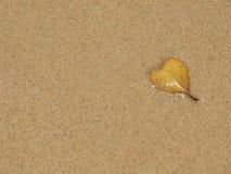 Beach leaf Royalty Free Stock Image