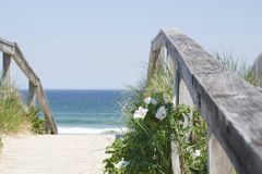Beach Life. Beach roses in bloom on a perfect summer day on the walkway to the beach at Ogunquit, Maine Stock Image